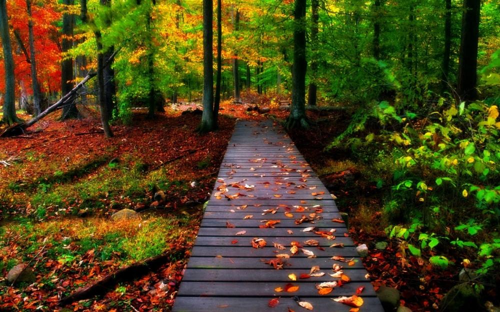 autumn-woods-bridges-desktop-hd.jpg