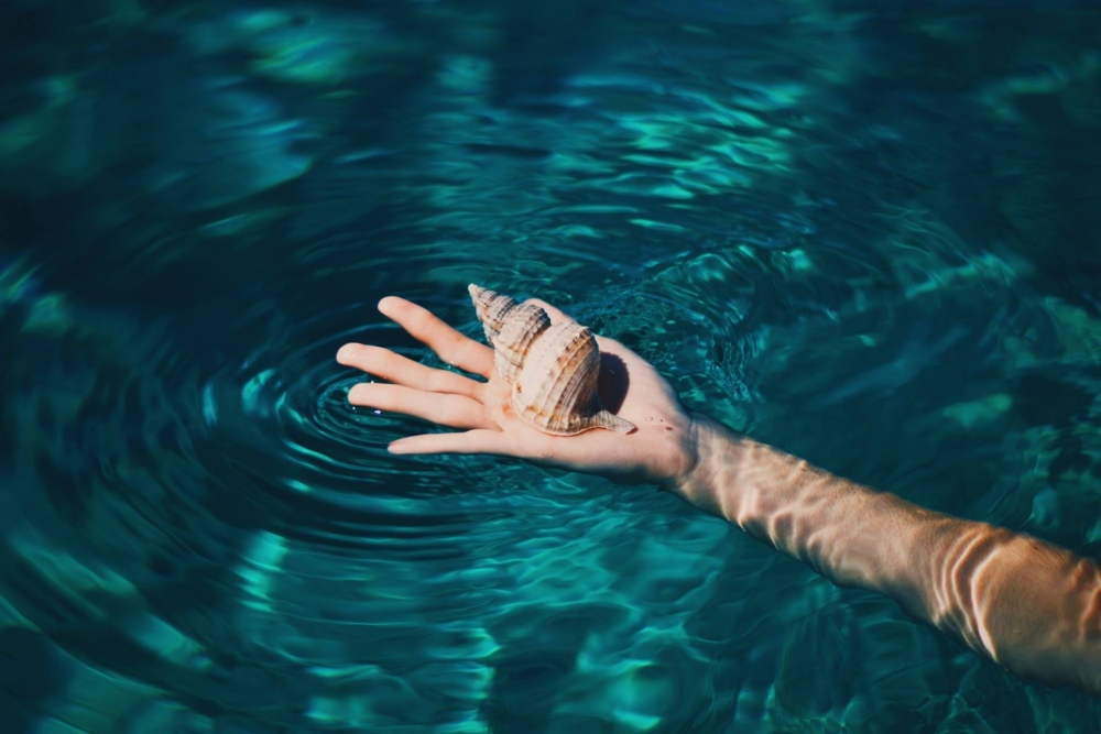 Water and shell.jpg