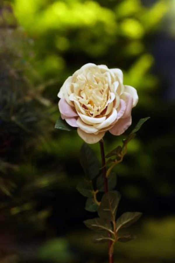 Old English Rose Vintage Pink Single.jpeg